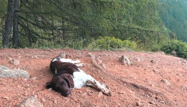Wande mit Hund bei der Pause