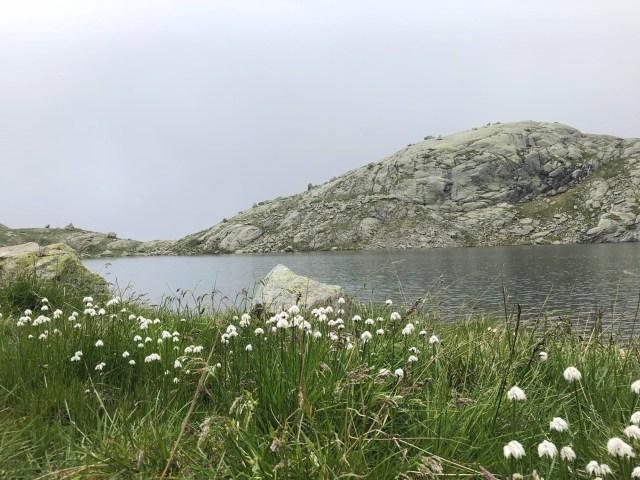 Wollgras vor dem Langsee