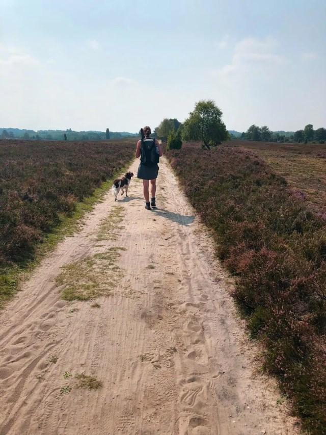 Weg mit Wander und Hund in der Lüneburger Heide
