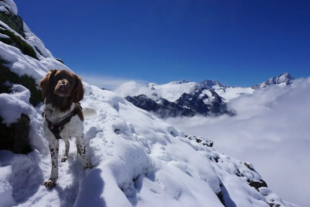 Bergsteigen mit Hund