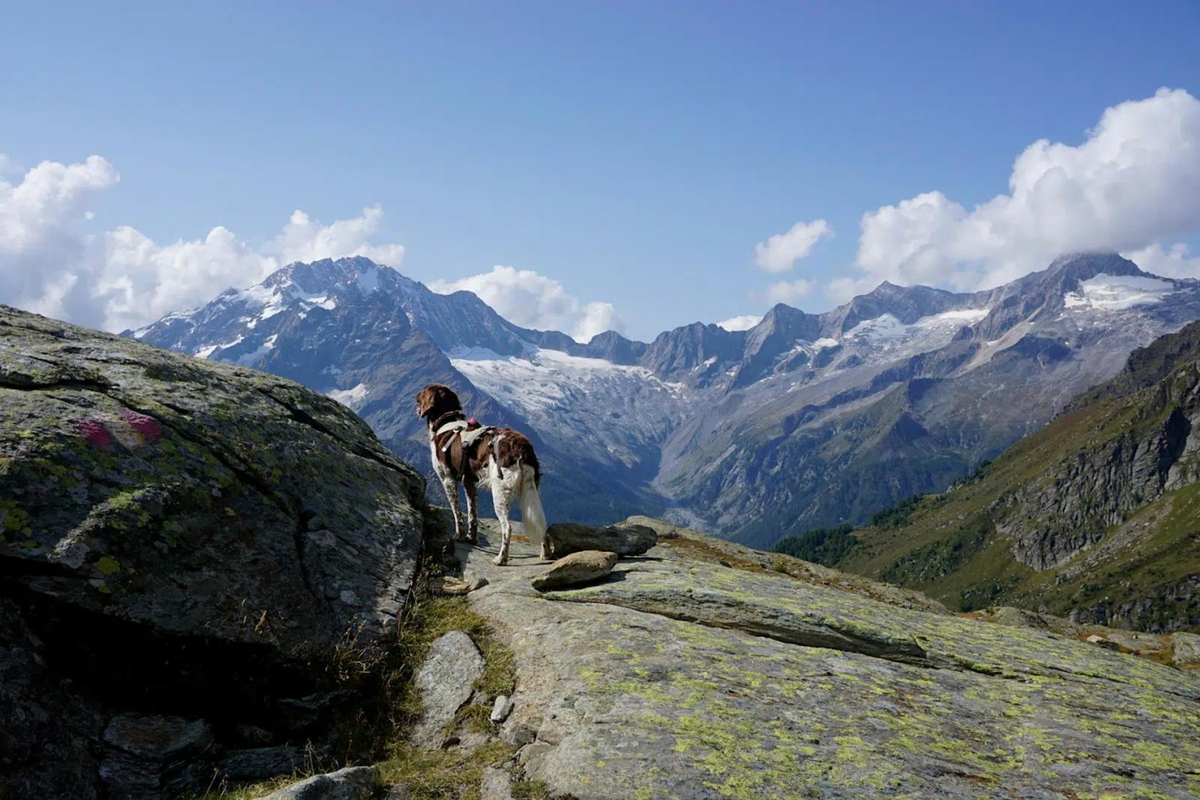 Mit Hund Bernina Tour