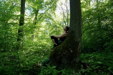 Wald-Wanderungen