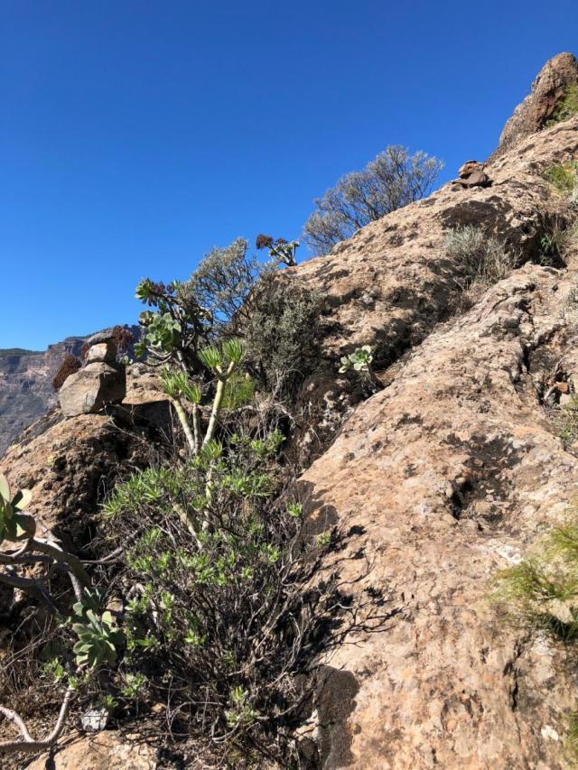 Abstieg vom Risco Blanco