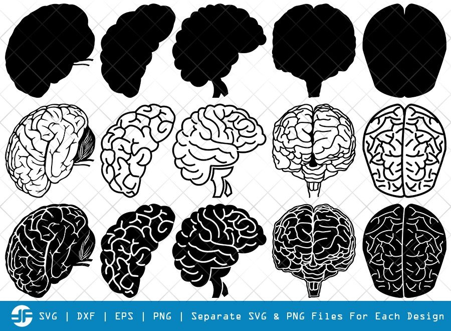 Human Brain SVG Cut Files | Brain Organ Silhouette Bundle