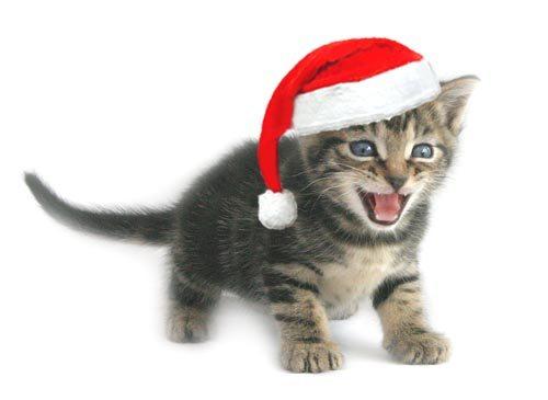 ChristmasKitten1