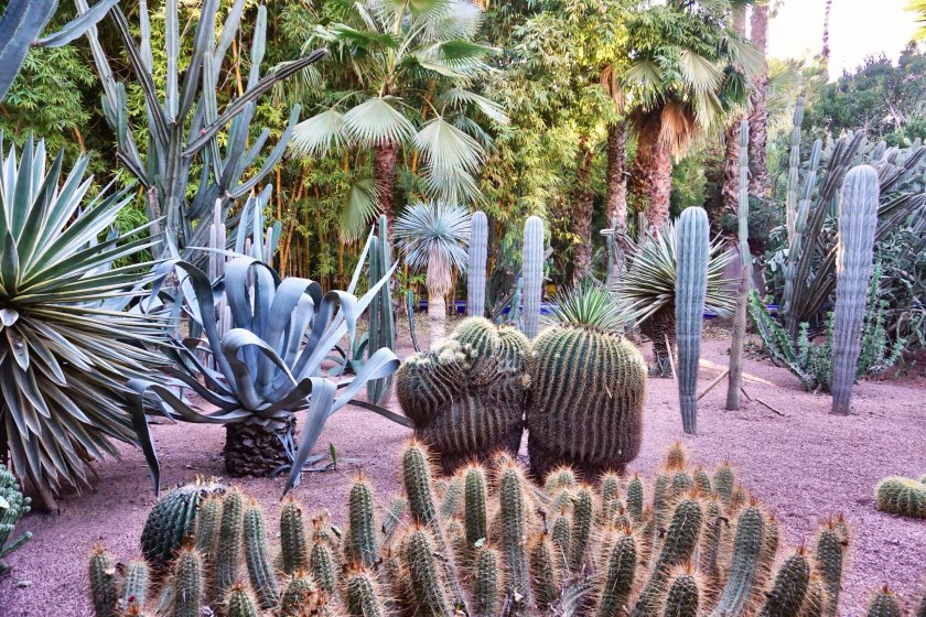 Exotic plants at the Majorelle Gardens in Marrakech, Morocco