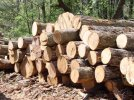 Timber and forestry ETFs offer growth, income, downside protection and diversification