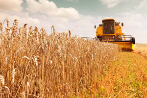 Grain ETFs soar as corn, wheat and soybean sear in US Midwest heat wave