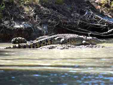 NT Wildlife - Crocodylus porosous