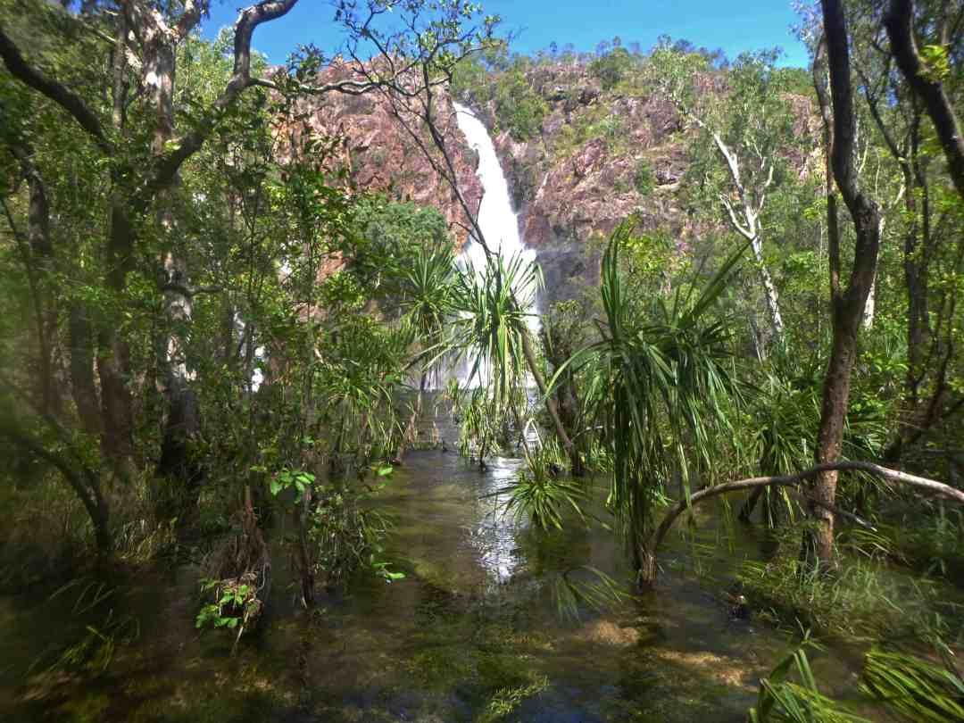 Wangi Falls looking through vegetation