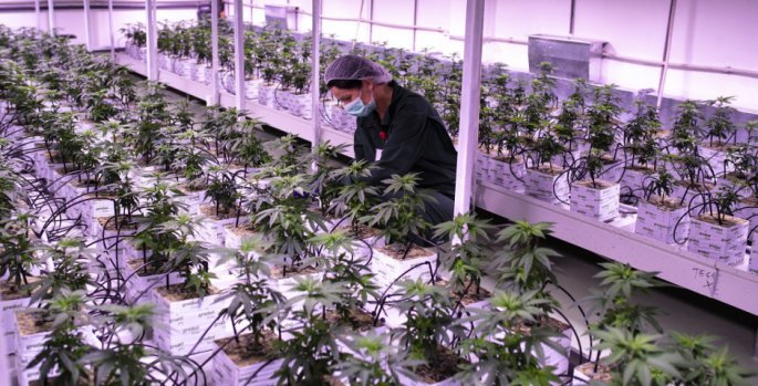 north-macedonia-cannabis.jpg