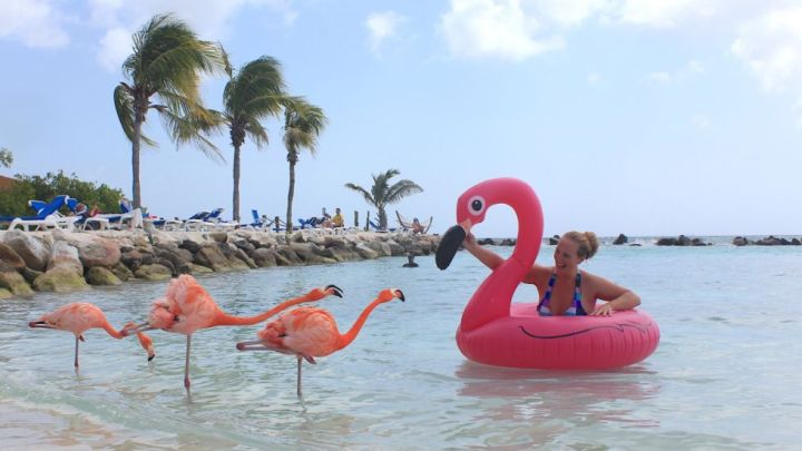 flamingo-island-aruba-copy