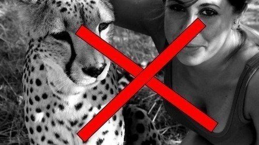 PERCHÉ È SBAGLIATO INTERAGIRE CON GLI ANIMALI SELVATICI?