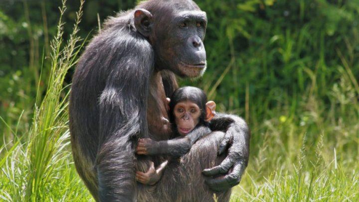 QUANDO IL TURISMO SALVA LE SPECIE ANIMALI