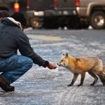 QUANDO IL TROPPO AMORE METTE IN PERICOLO GLI ANIMALI SELVATICI