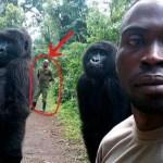 INTERVISTA AL RANGER CHE SALVA I GORILLA IN CONGO