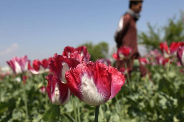 چگونه ایالات متحده در افغانستان مغلوب تجارت تریاک شد؟