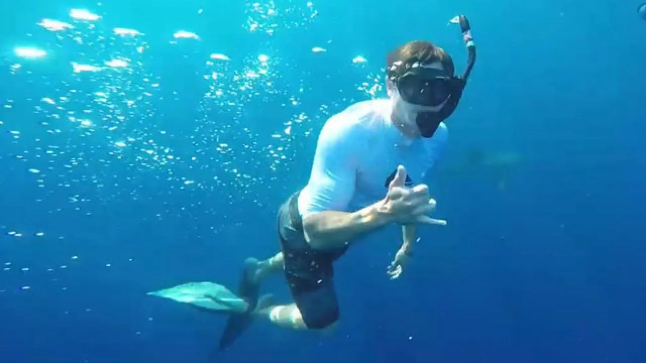 Zac Efron Swims With The Sharks And Shows Off His Bulge In