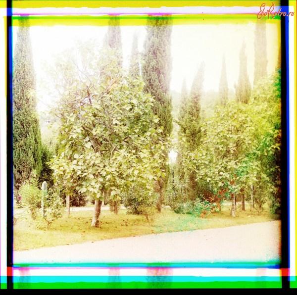 Инжир в Сухумском ботаническом саду - Страны - бывшие ...