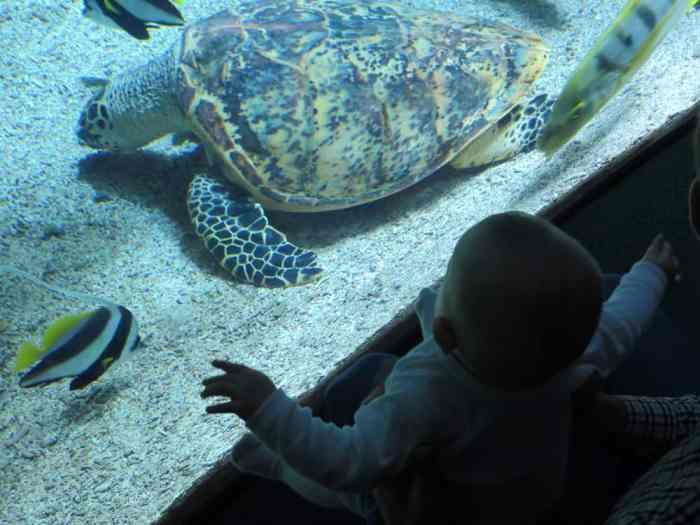 Aquarium La Rochelle avec bébé 2016 ©Etpourtantelletourne.fr