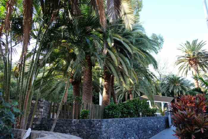 Tenerife Santa Cruz 2017 ©Etpourtantelletourne.fr