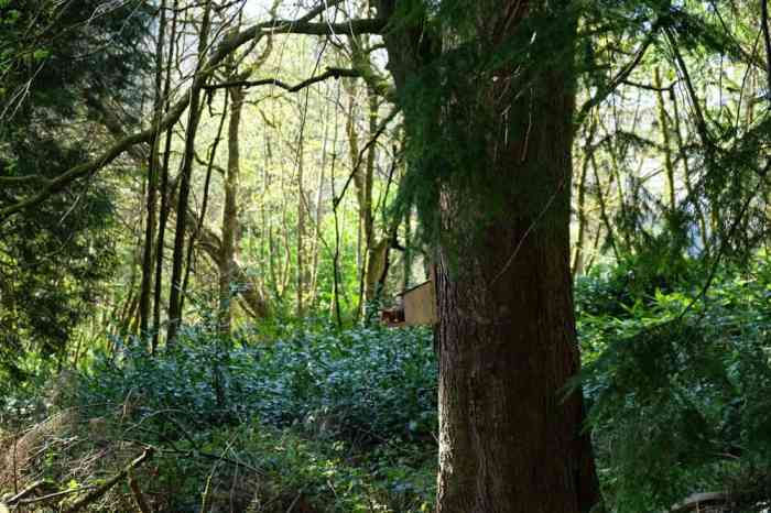 Glenariff Forest Park ©Etpourtantelletourne.fr