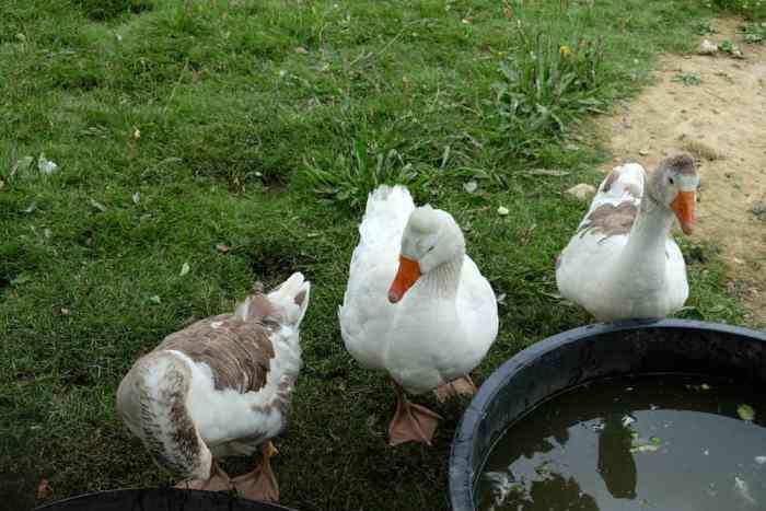 Écomusée du pays de Rennes, animaux ©Etpourtantelletourne.fr