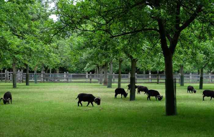 Écomusée du pays de Rennes, ferme du Bintinais moutons ©Etpourtantelletourne.fr