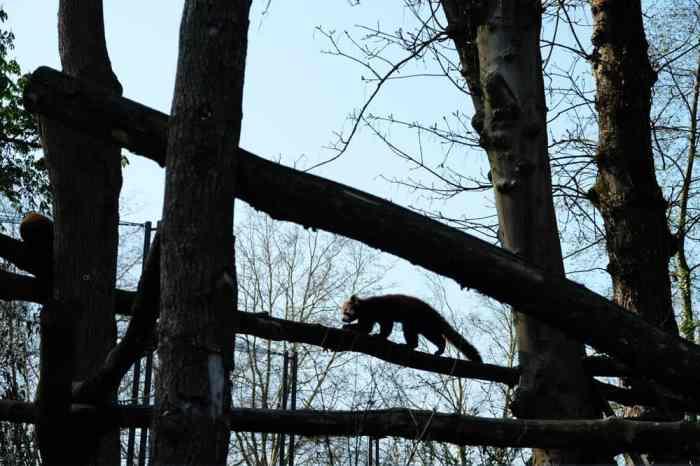 Visite de Lille en famille : le zoo  ©Etpourtantelletourne.fr