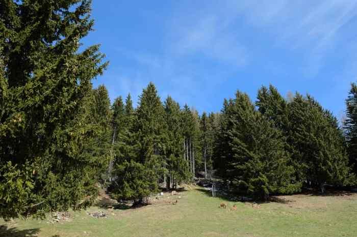 Visite du parc animalier de Merlet, avec vue sur le Mont Blanc ©Etpourtantelletourne.fr