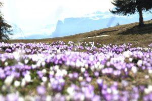 primavera malga meltina croci con vista sul scilar