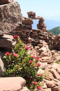 stoanerne mandln steinerne mandlen uomini di pietra con rose alpine meltina sarentino