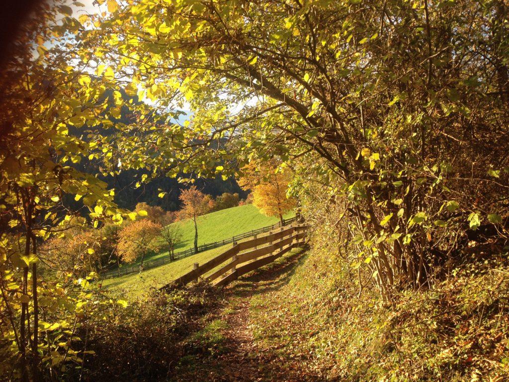 autunno sentiero köfeleweg alberi decidui meltina alto adige