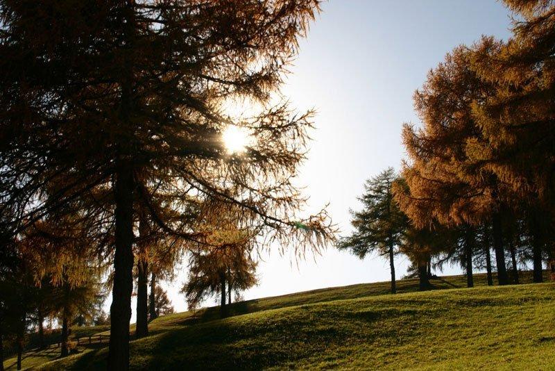 salto dorato in autunno nel tramonto