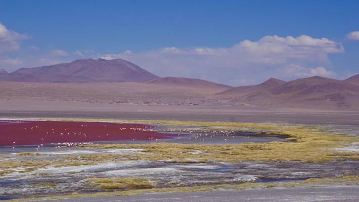 Sucre, Salar et Sud Lipez - Laguna Colorada
