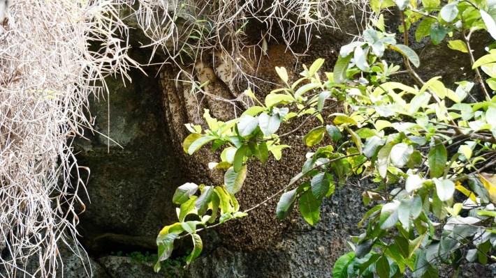 Île de Pâques - À la recherche de Rapa Nui pool - La ruche