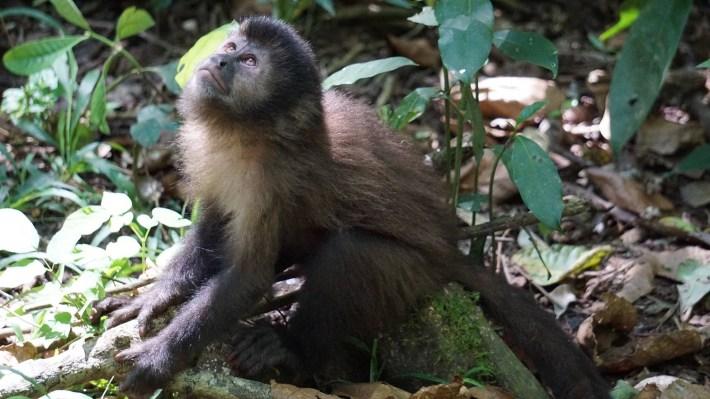 En Argentine, on fait comme les Argentins - Les singes