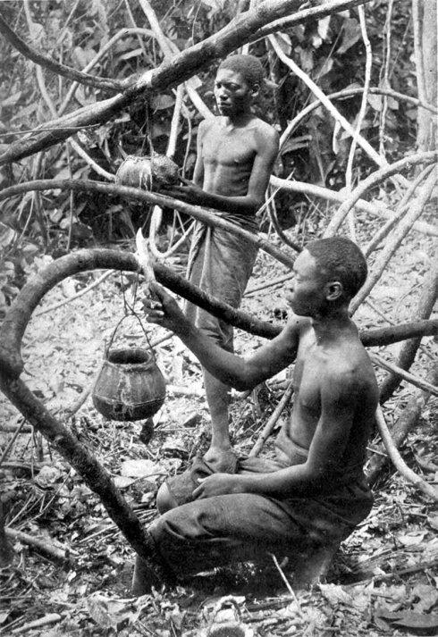 Congoleño esclavizado extrayendo caucho de una enredadera cerca al pueblo de Lusambo en Sankuru