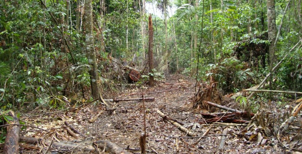 EU-Mercosur Trade Causing Amazon Deforestation -