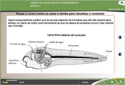 CURSO ONLINE DE ZOOLOGIA DOS VERTEBRADOS3