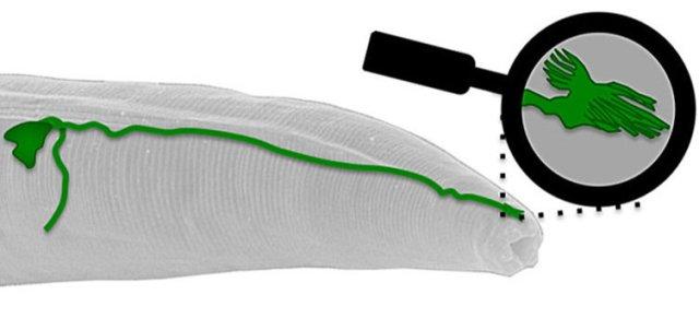 primeiro-sensor-de-campo-magnetico-em-um-animal-e-descoberto