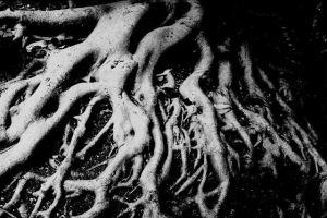 Breeding deeper roots could slash CO2