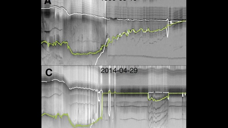 This is radar depth-sounder data from before and after the breakup of the Zachariæ Isstrøm ice shelf. The green line reveals the ice bottom, and loss of ice between 1999-2014. The white line represents hydrostatic equilibrium estimates of the ice bottom. Credit: KU News Service   University of Kansas