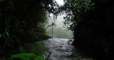 Costa Rica rain forest.