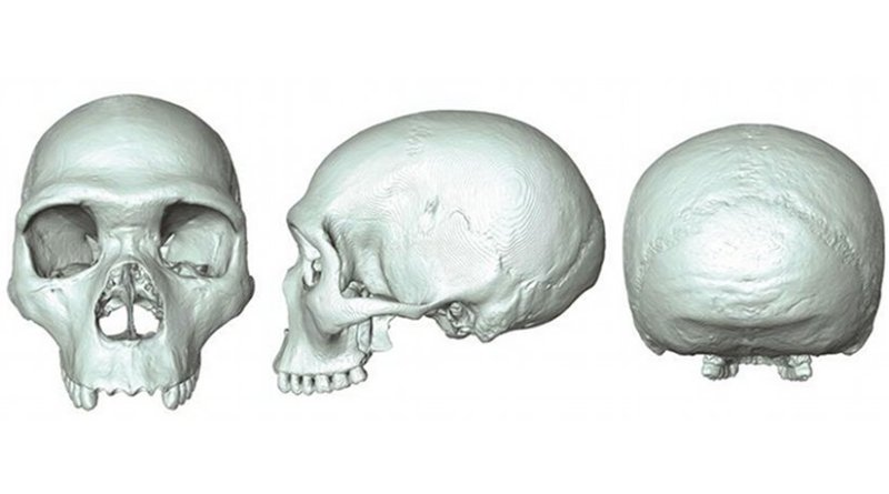 The 'virtual fossil' of last common ancestor of humans and Neanderthals Credit: Aurélien Mounier