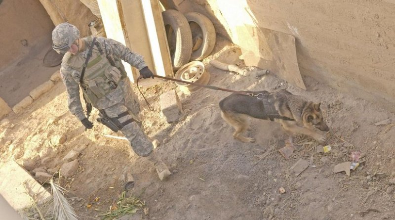 An Air Force dog handler attached to the US Army 25th Infantry Division searches for explosive devices during a raid in Iraq in 2006. VA researchers found that guerilla tactics such as suicide attacks and roadside bombs may trigger more PTSD than conventional warfare. Credit: U.S. Air Force