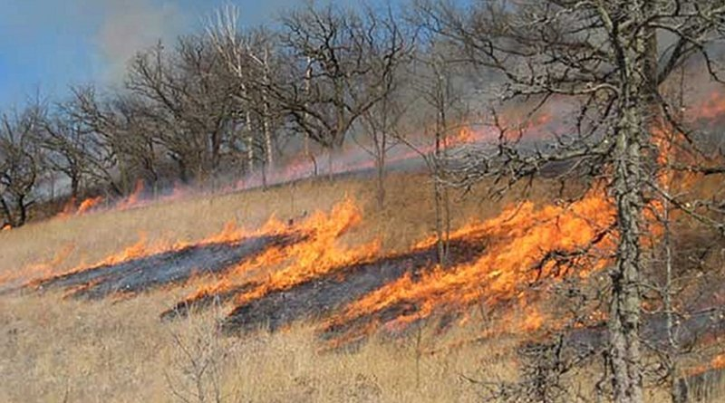 Prescribed burn in Wisconsin, United States. Photo by Steepcone, Wikipedia Commons.