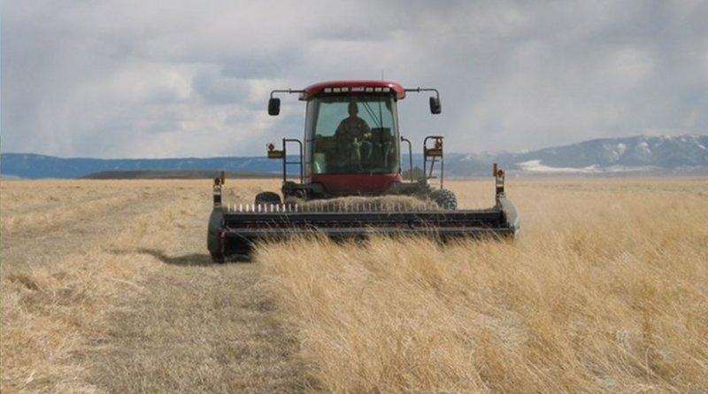 Harvesting CRP grassland