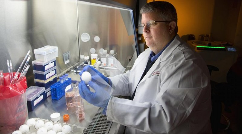 Ted Ross is director of UGA's Center for Vaccines and Immunology. He is a professor and Georgia Research Alliance Eminent Scholar in Infectious Diseases in the College of Veterinary Medicine. Credit Billy Howard