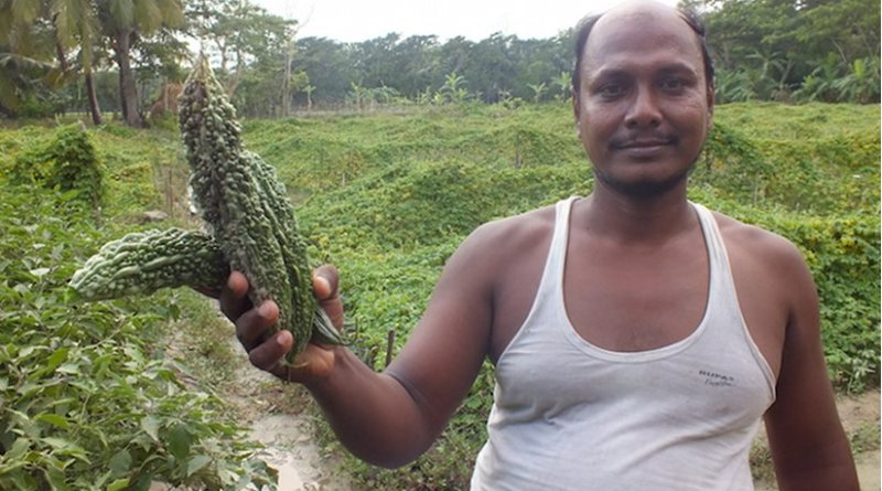 Aktar Hossain, a local farmer who adapted the new technique in Aminabad in Char Fasson, shows good harvest of vegetable from his crop field. Credit: Naimul Haq.